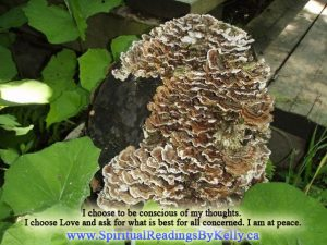 Nature6 - Spiritual Readings By Kelly